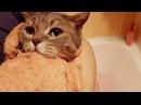 Как мы с Василисой мыли кота Пряника. Банный день у смешного кота Пряника