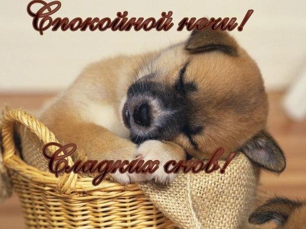 https://pp.vk.me/c604324/v604324286/13cb8/-UGBECg8glc.jpg
