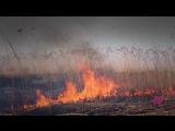 «Волонтеры. Игра с огнем». Почему простые люди бросают все и едут тушить пожары в России
