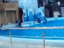 Выступление дельфинов в Новосибирском дельфинарии 18.08.16