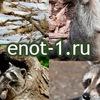 Еноты | Raccoons (фото, видео, гифки, граффити)
