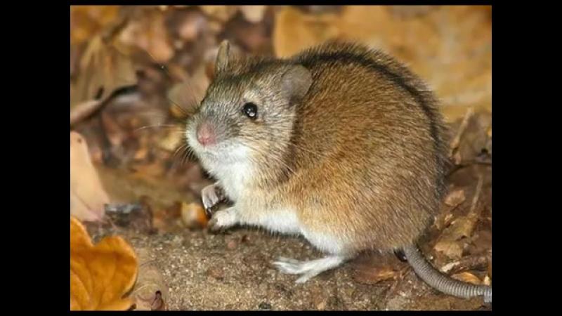 Как избавиться от мышей фантастика