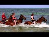 Carnival Cruise Line: Не просто отпуск!