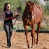Гимнастика для лошадей