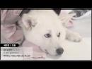 아이러브펫(I Love Pet!) fulll 메이킹 영상