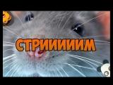 Stream по Харстоун и УДотке! twitch.tvnotactic1337