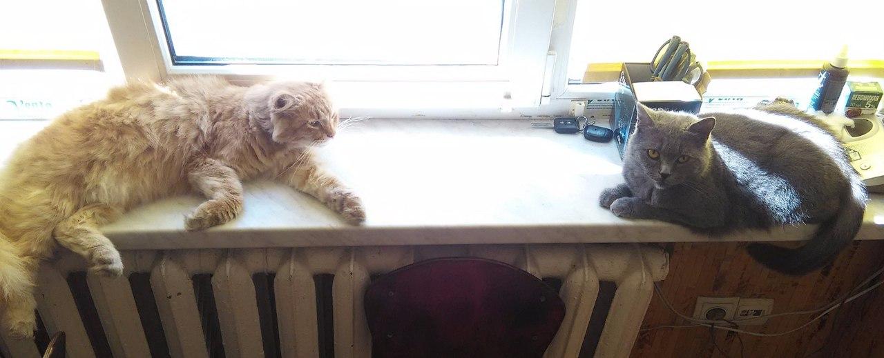 Сглазили кота что делать