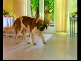 Дом собаки. Серия-3