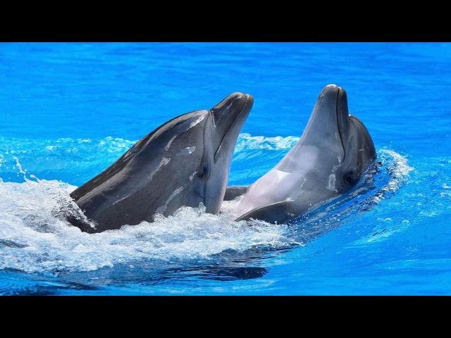 Харьковский дельфинарий Немо 1