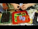 Как быстро сделать стаканчики для рассады из подложки Грунт для рассады