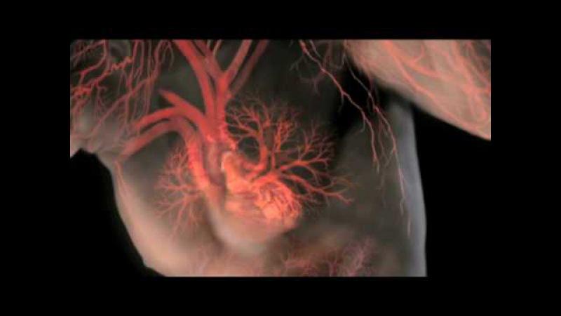 Функция крови и почек при анемии aeyrwbz rhjdb b gjxtr ghb fytvbb