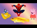 Peppa pig and her desires. Spiderman and Snow White. Peppa Pig - Goldie The Fish. Свинка Пеппа