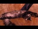 Спят мохнатые куняшки. Наш любимчик Винсент. 1год4мес.