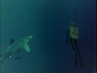 02.1967 Акулы (Подводная одиссея команды Кусто)