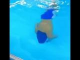 Как проходят наши занятия по плаванию