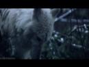 Выживая с волками Survivre avec les loups 2007 / Драма