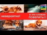 Счастливое исцеление собаки | Чудесное спасение Paralyzed puppy saved by the bell animal Shelter in