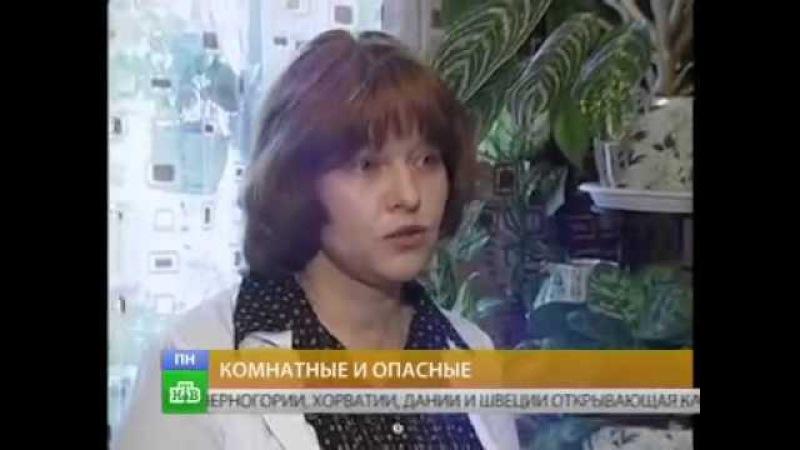 Астма и Комнатные растения детский Пульмонолог аллерголог Кулешова Ю А на НТВ