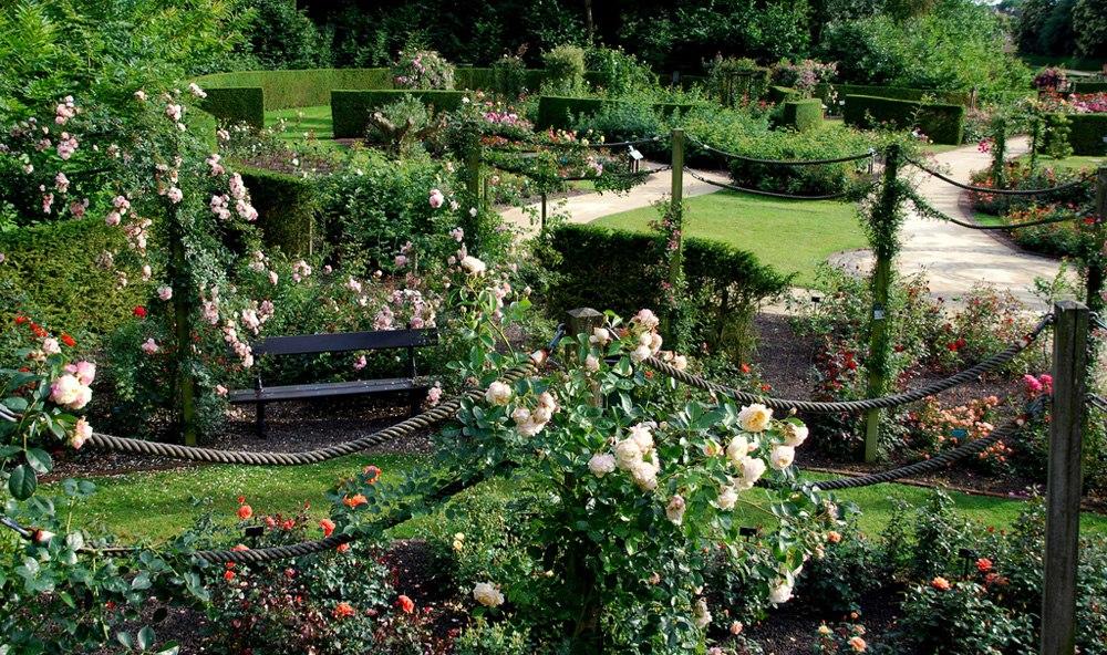 Розарий Колома в Бельгии: идея для розария на даче