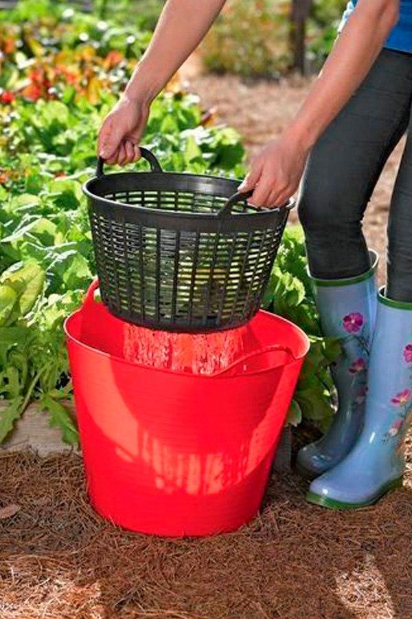 Зачем промывать землю в горшке с рассадой