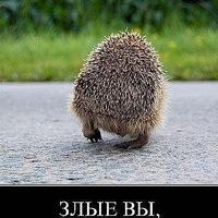Аватар Александра Федосеева