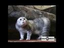 кошки атакуют cat attack
