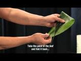 Hydrangea workshop by top florist Gary Loen