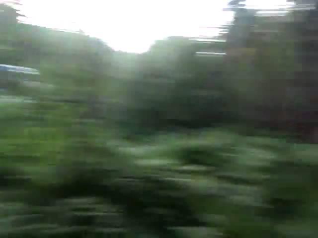 лес дорога жигули