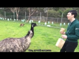 A Day in the Life of Dan and Phil in AUSTRALIA! rus sub