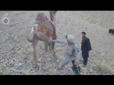 Американский солдат против верблюда -  (Ржач, секс, порно, смешно, приколы,  вот это поворот, драка, разборки).720
