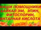 Байкал ЭМ, Эпин Экстра, Фитоспорин М, Янтарная кислота - наши дачные помощники