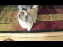 Cody The Screaming Dog | Dog | AFV