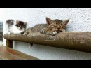 Relax take it easy! · coub, коуб