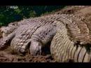 суперхищник крокодил