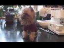 Как связать свитер для собаки своими руками.Одежда для собак на канале Дела дома