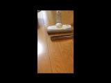 Пылесос и губная гармошка