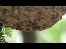 wasp nest on Cumberland Island, Georgia 2015