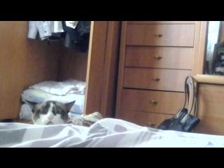 Смешная реакция кота