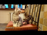 Top 25 Cute Kittens and Funny Cats Yawns