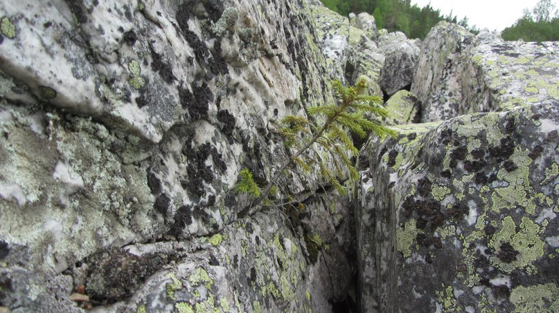 Таганай. Жизнь среди камней. Каменная река