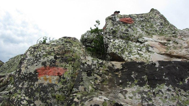 Красные метки на камнях и деревьях помогали сориентироваться при подъеме на Митькины скалы