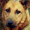 Воркутинское общество защиты бездомных животных