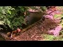 Цвет рая / Rang-e khoda (1999)