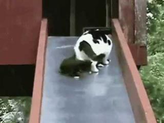 Котята на горке зажигают