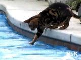 Кот собирается бежать по воде (The cat is going to run on water)
