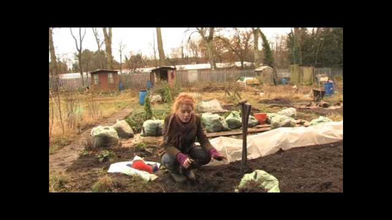 Winter work on the allotment with Alys Fowler