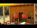 Семейный отдых. ГИГАНТСКИЕ ТЫКВЫ. Поездка на ферму в штате ДЖОРДЖИЯ / American liFE # 228