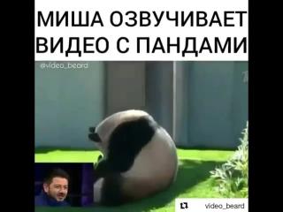 Михаил Галустян озвучивает кавказских панд