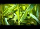 Minuscule - Sow the wind and reap the whirlwind / Qui sème le vent récolte la tempête Season 2