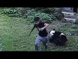 Chinese man WRESTLES a giant panda bear after leaping into its enclosure to impress some women